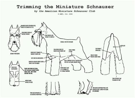 Schnauzer grooming chart (With images) | Schnauzer